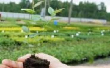 Основные способы выращивания саженцев