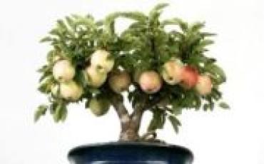 Как вырастить яблоню: основные способы и практические рекомендации