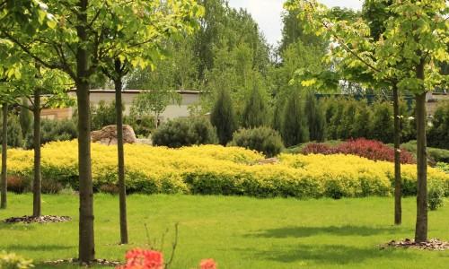 В озеленение территории входят следующие виды услуг: