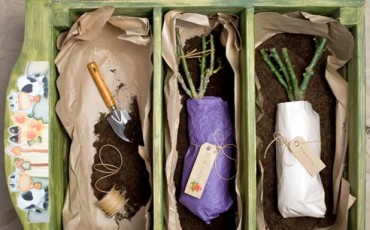 Как сохранить саженцы или черенки роз до посадки