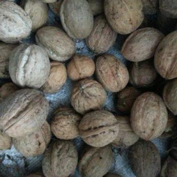 Грецкий орех Бахчисарайский-2