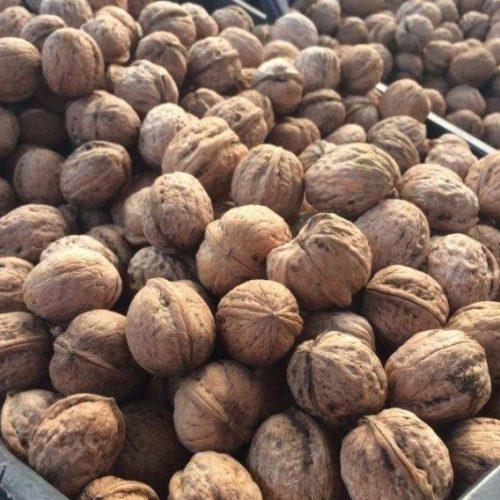 Грецкий орех Бахчисарайский
