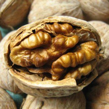 Грецкий орех Степной-1