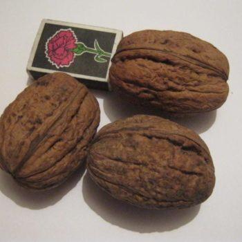 Грецкий орех Великан-2