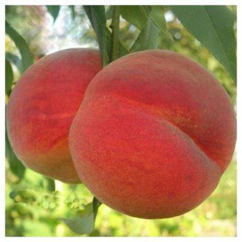 Персик Майский цветок-2