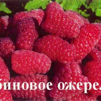 Малина Рубиновое Ожерелье-1