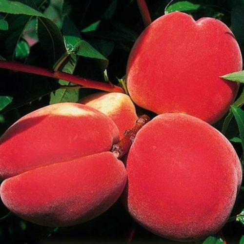 Персик - слива Инка