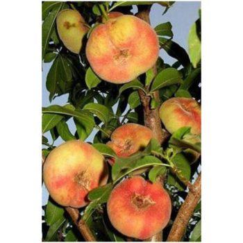 Персик инжирный  Бельмандо-2