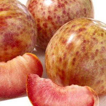 Плумкот Триумф (гибрид сливово абрикосовый)-2