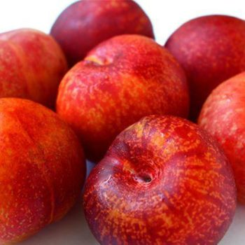 Плумкот Триумф (гибрид сливово абрикосовый)-1