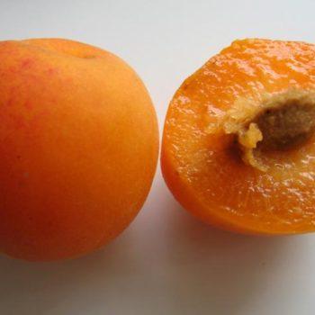 Плуот Валентин (гибрид абрикосово сливовый)-1