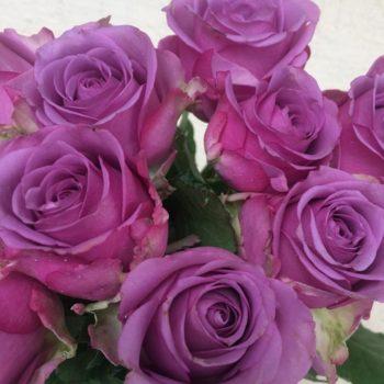 Роза Холодная Вода-2