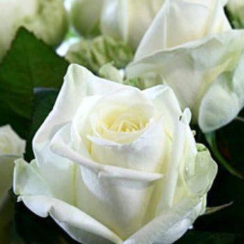 Роза Магади-1