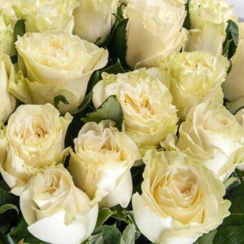 Роза Мондиаль-2