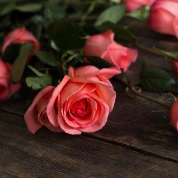 Роза Муви Стар-1
