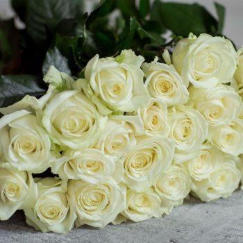 Роза Аваланж-2