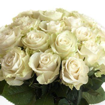Роза Мондиаль-1