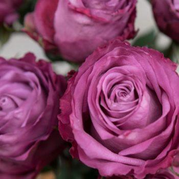 Роза Муди Блюз-1