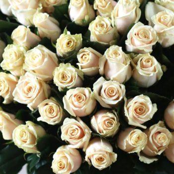 Роза Талея-1