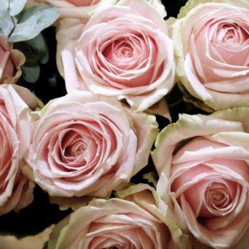 Роза Свит Аваланж-2