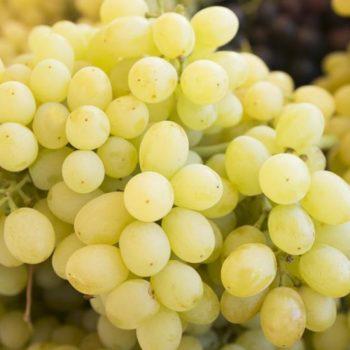 Виноград Лора-2