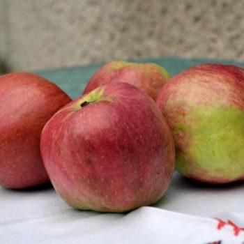 Яблоня Джумбо Помм-2