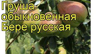 Груша бере Русская-1